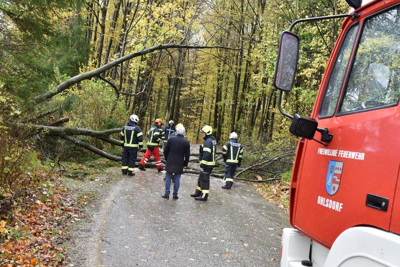 Sturmschaden-Ohlsdorf-Kohlwehr-06-©-Wolfgang-Spitzbart