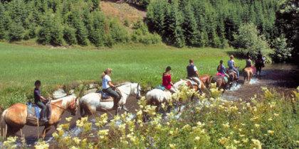 """Das Glück dieser Erde, liegt auf dem Rücken der """"Traunreiterpferde""""   Foto: OOE Tourismus"""