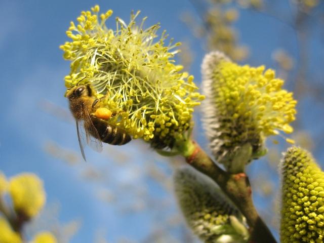 Das Geheimnis des Bienensterbens - Filmpräsentation in Altmünster   Foto: Kahtrin Reinhardt/aboutoixel de