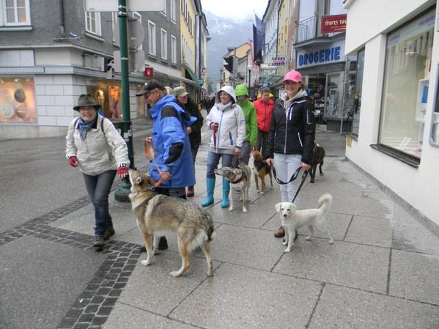 Psv-Hundeschule-Bad Ischl vom Trainingsgelände ins Stadtzentrum