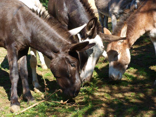 Rutzenmoos: Gnadenhof Kunterbunt - ein Zufluchtsort für verletzte Tierseelen