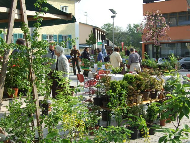 Pflanzenmarkt in Altmünster