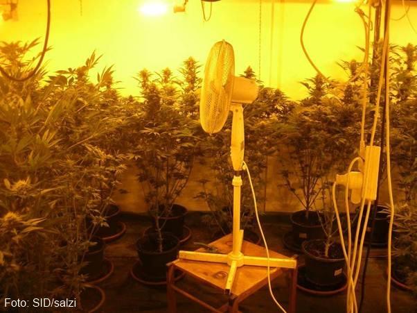 Vorchdorf: Bauernhof diente als Zuchtplantage einer großangelegten Cannabis-Indoor-Anlage | Foto: SID