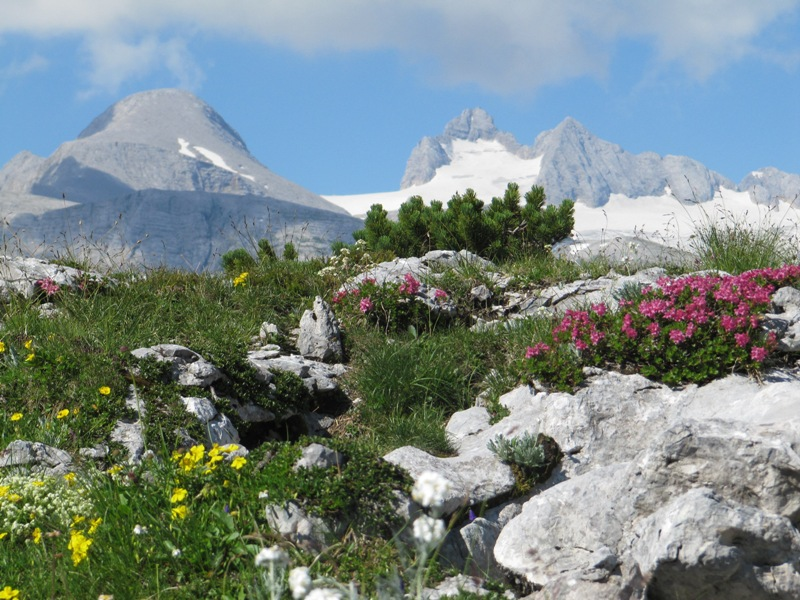 Frühling auf 2000 Meter: Farbenvielfalt am Krippenstein!