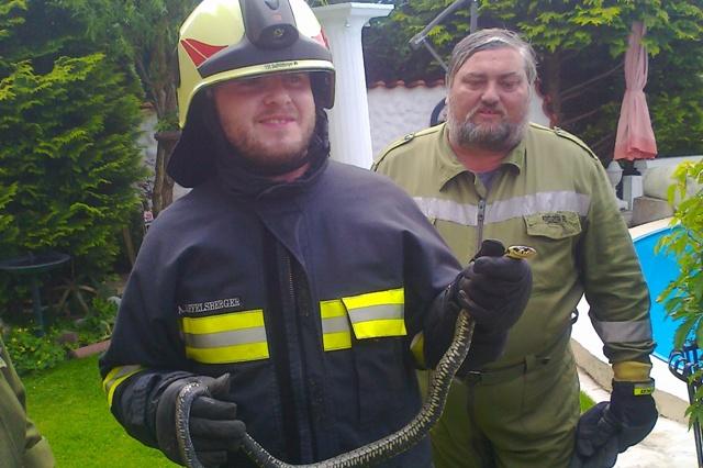 Ohlsdorf: Feuerwehr fing Ringelnatter ein