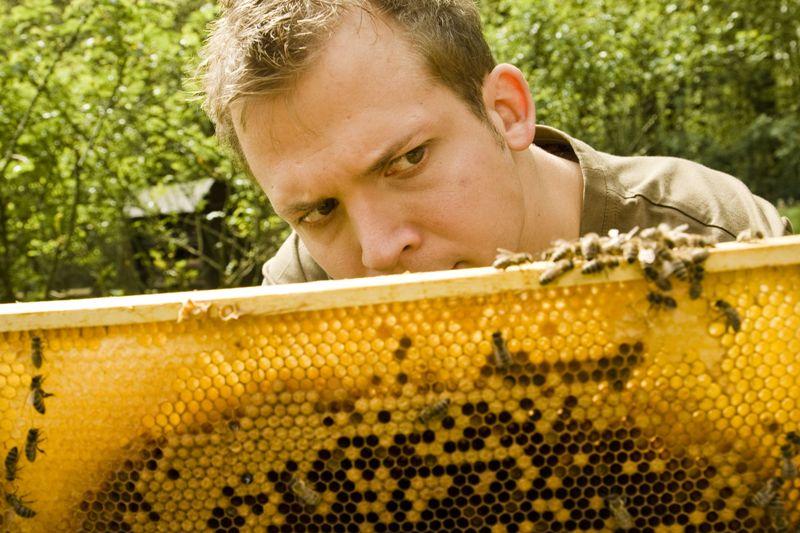 Tag des offenen Bienenstocks in Altmünster