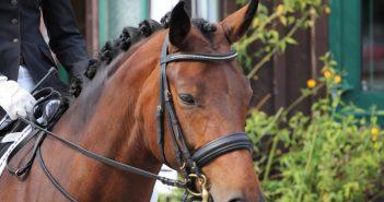 Aurachkirchen: Hunde erschrecken Pferde - zwei Reiterinnen von ihren Pferden abgeworfen und verletzt