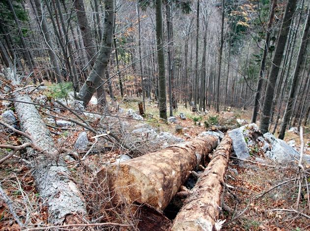 Zwei Tote bei Forstunfall in Pöndorf - Ehepaar getötet