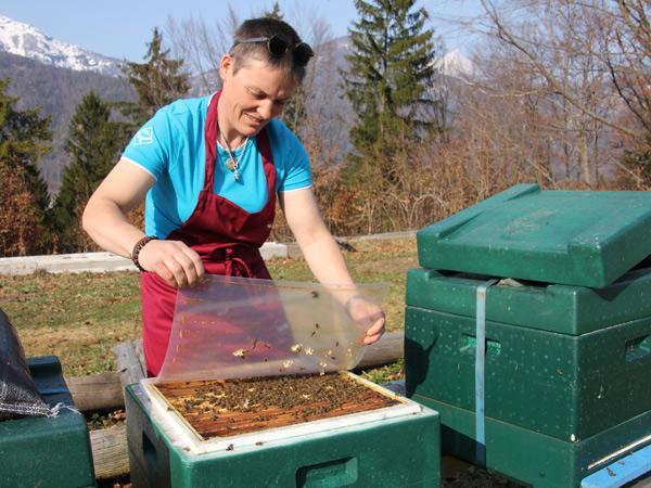 Chefin von 8 Millionen Arbeiterinnen - die Gosauer Bienenkönigin