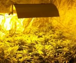 Polizei stellt Cannabis-Growbox sicher