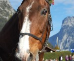TOFT 2012 Pferd einzel 335KB