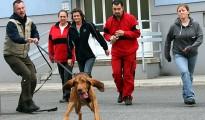Vöcklabrucker Suchhunde zeigten Einsatzfreude und hohe Motivation bei Trainingswoche