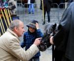 pferdemarkt 2015_Foto_klein