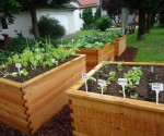 urban gardening2